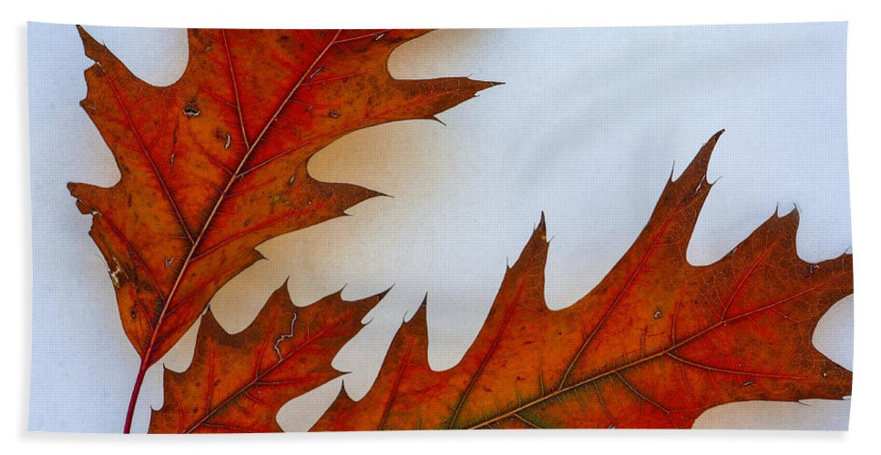 Leaves On Snow Hand Towel featuring the photograph Fragile Transformation by Bill Sherrell