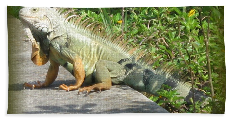 Iguana Hand Towel featuring the photograph Framed Iguana by Christiane Schulze Art And Photography
