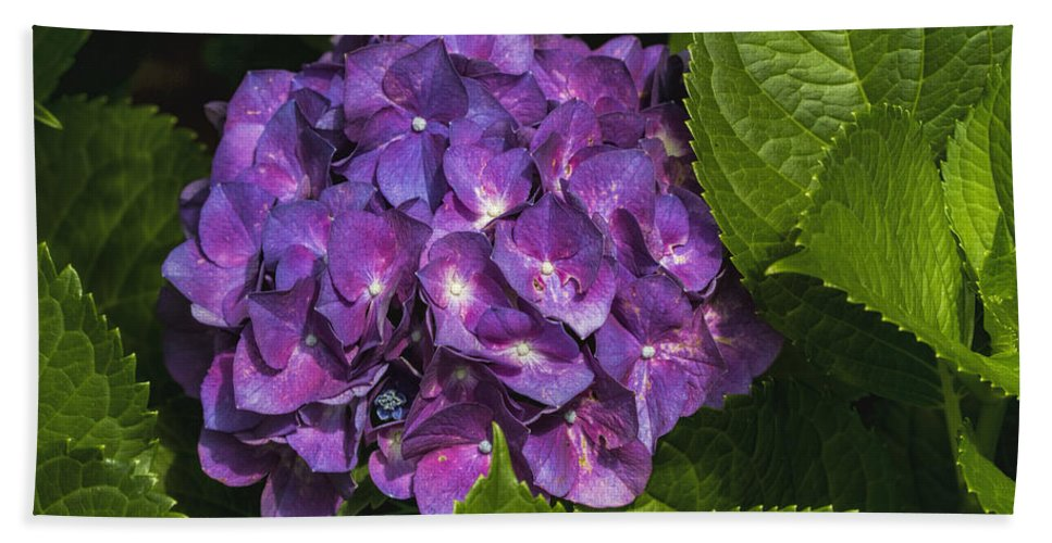 Hydrangea Macrophylla Hand Towel featuring the photograph Framed Purple Blue Hydrangea Blossom by Kathy Clark