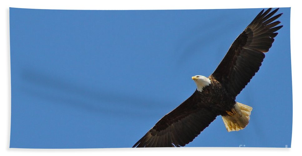 Eagle Bath Towel featuring the photograph Freedom by Rick Monyahan