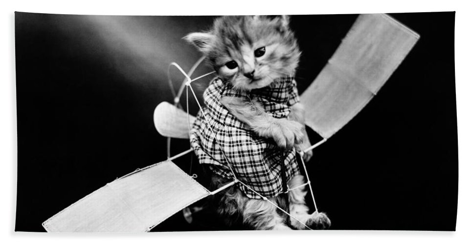 1910 Bath Sheet featuring the photograph Frees Kittens, C1914 by Granger