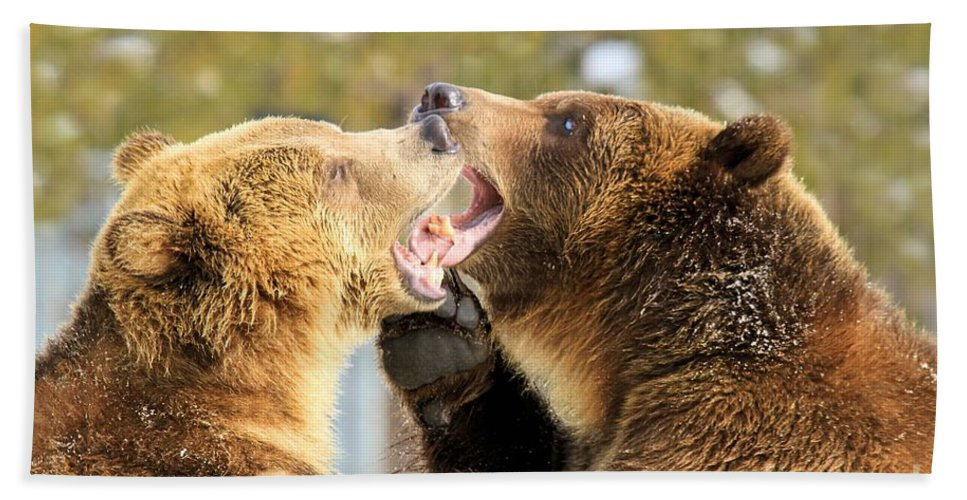 Grizzly Bear Hand Towel featuring the photograph French Kiss by Adam Jewell