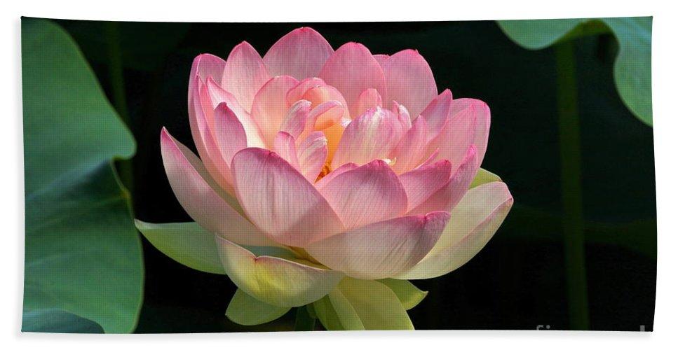Fresh lotus bloom hand towel for sale by byron varvarigos fresh bloom lotus flower hand towel featuring the photograph fresh lotus bloom by byron varvarigos mightylinksfo