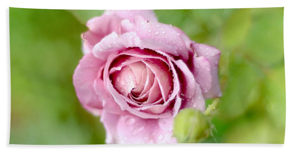 Rose Hand Towel featuring the photograph Fresh Morning Rose by Jenny Rainbow