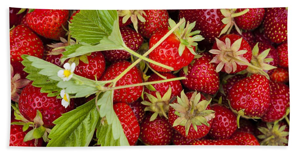 Strawberries Hand Towel featuring the photograph Fresh Picked Strawberries by Elena Elisseeva