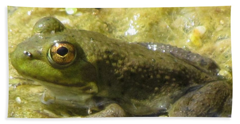 Frog Bath Sheet featuring the photograph Frog by Eric Noa