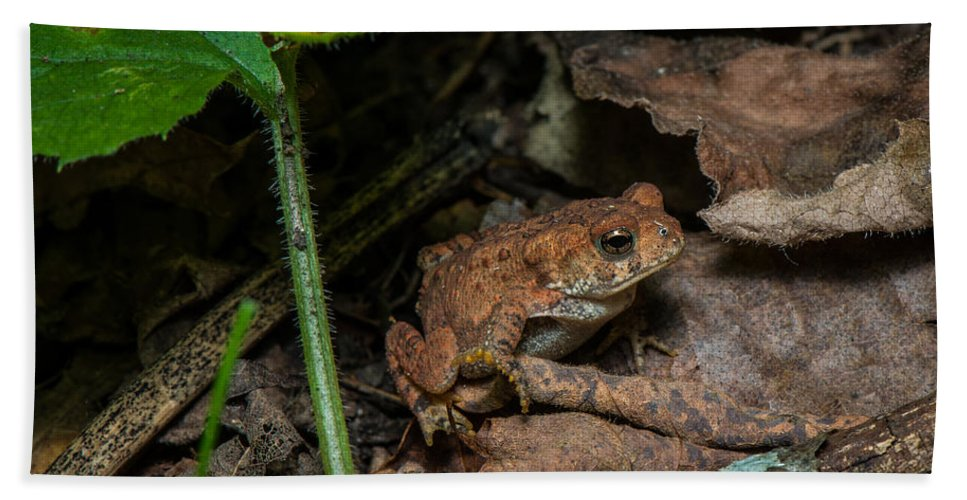 Amphibian Hand Towel featuring the photograph Frog Hiding On The Forest Floor by Paul Freidlund