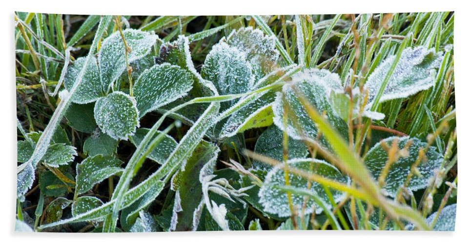 Frost Bath Sheet featuring the photograph Frost On Strawberry Leaves by Crystal Heitzman Renskers