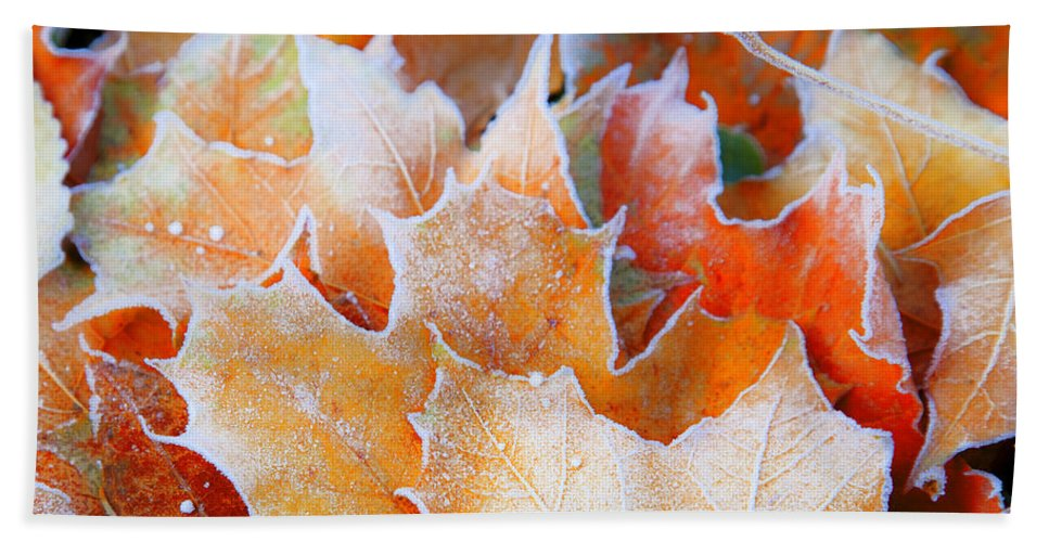 Autumn Bath Sheet featuring the photograph Frost Touched by Theresa Tahara