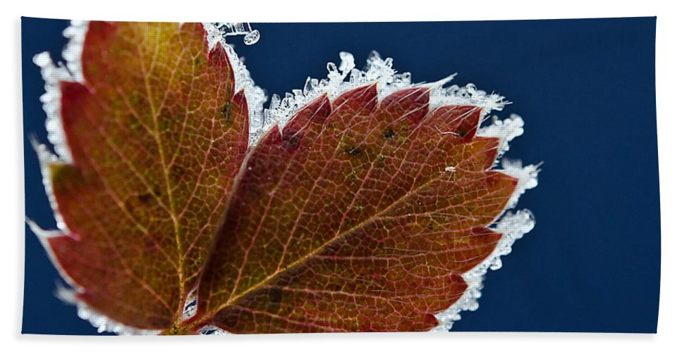 Leaf Bath Sheet featuring the photograph Frosted Leaf by Donna Doherty