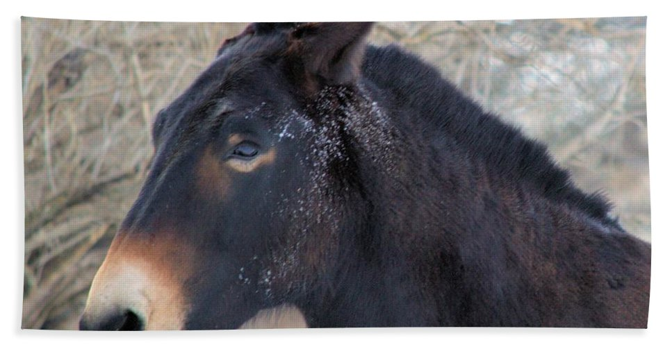 Frost Bath Sheet featuring the photograph Frosty Face by Bonfire Photography