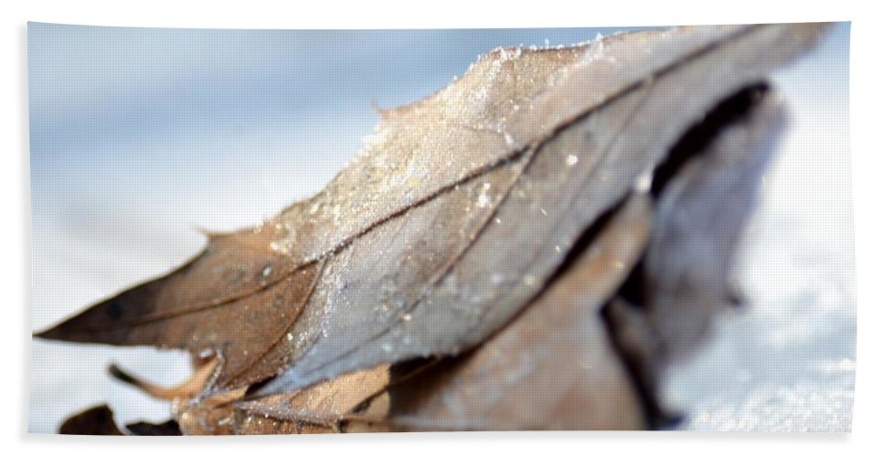 Frosty Leaves In The Morning Sunlight Hand Towel featuring the photograph Frosty Leaves In The Morning Sunlight by Maria Urso