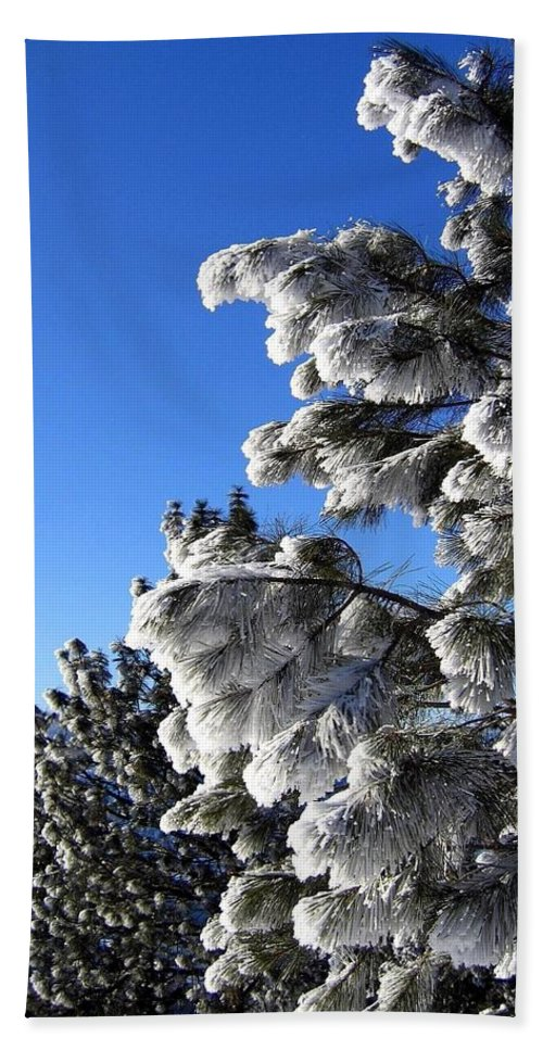 Frost Hand Towel featuring the photograph Frosty Limbs by Will Borden