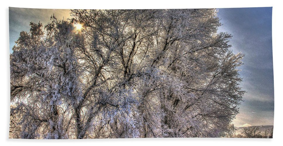 Colorado Hand Towel featuring the photograph Frosty Morning by Bob Hislop
