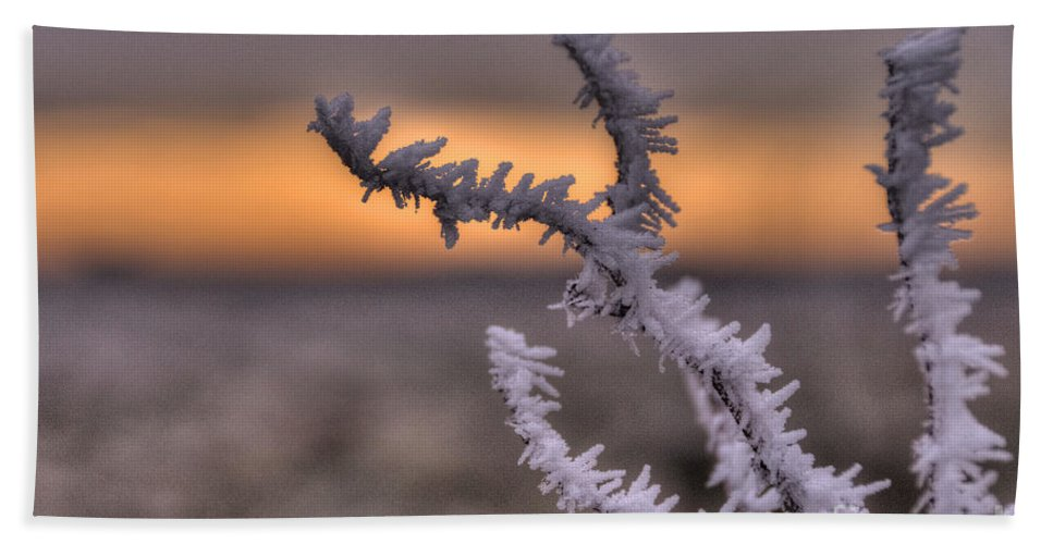 Frost Hand Towel featuring the photograph Frosty The Twig by Rob Hawkins