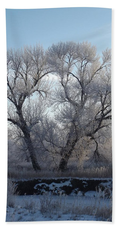 Frost Hand Towel featuring the photograph Frosty Trees 4 by Bonfire Photography