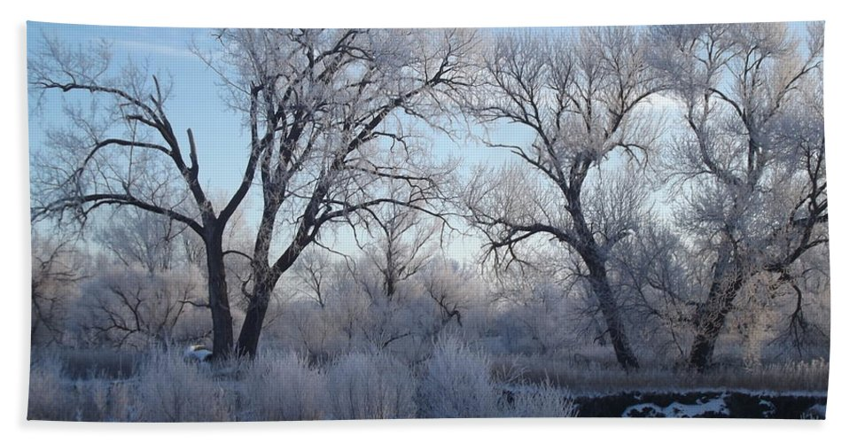 Frost Hand Towel featuring the photograph Frosty Trees by Bonfire Photography
