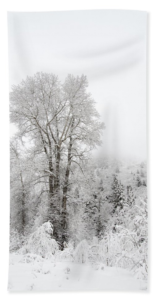 Winter Hand Towel featuring the photograph Frozen Giant by Dustin LeFevre