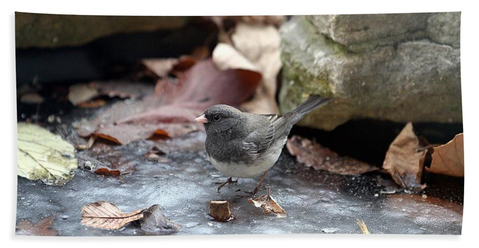Dark Eyed Junco Bath Sheet featuring the photograph Frozen Pond by Elizabeth Winter