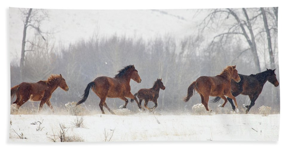 Mustangs Hand Towel featuring the photograph Frozen Track by Mike Dawson