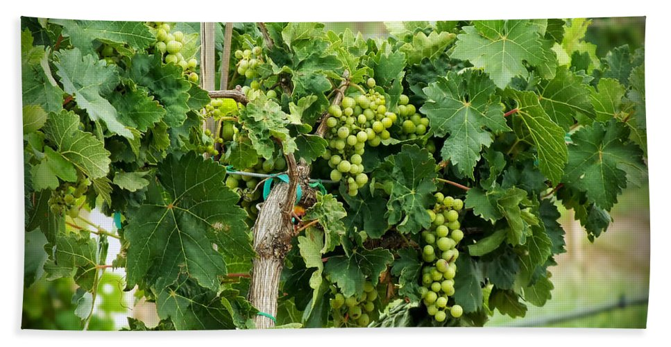 Wine Hand Towel featuring the photograph Fruit On The Vine by Lucinda Walter