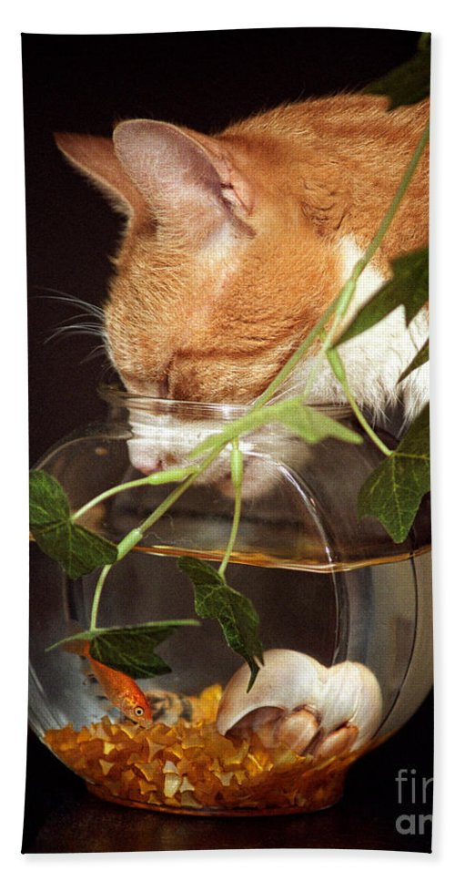 Cats Bath Sheet featuring the photograph Frustrated Feline by Geoff Crego