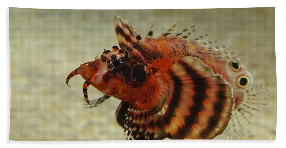 Aquarium Bath Sheet featuring the photograph Fu Manchu Lionfish by John Shaw