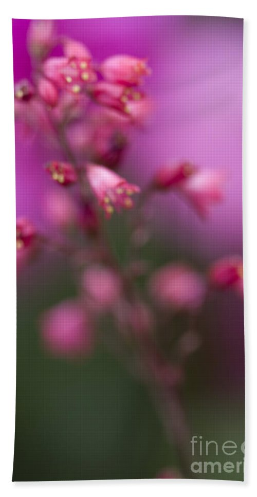 Pink; Fuchsia; Bright; Flowers; Nature; Close Up; Fragile; Beautiful; Delicate; Fragrant; Pretty; Tranquil; Beauty; Color; Green; Outdoors; Tiny Hand Towel featuring the photograph Fuchsia Explosion by Margie Hurwich