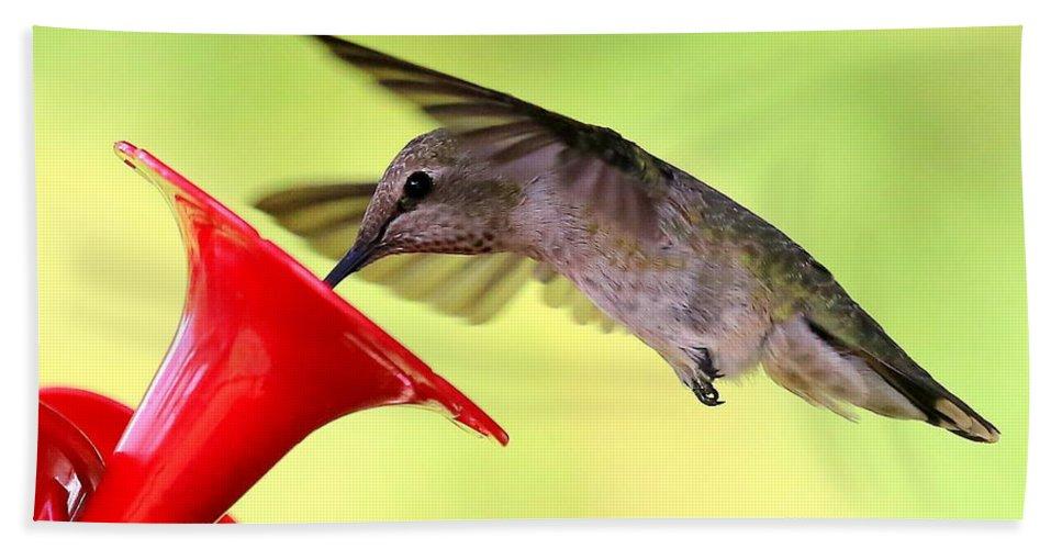 Hummingbird Bath Sheet featuring the photograph Fun Summer Hummingbird by Carol Groenen