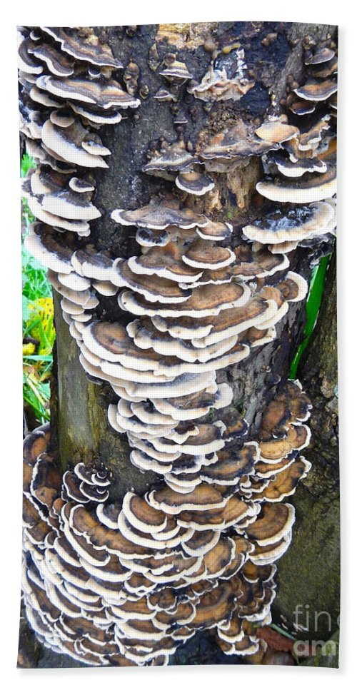 Fungus Hand Towel featuring the photograph Fungus Invasion by Loreta Mickiene