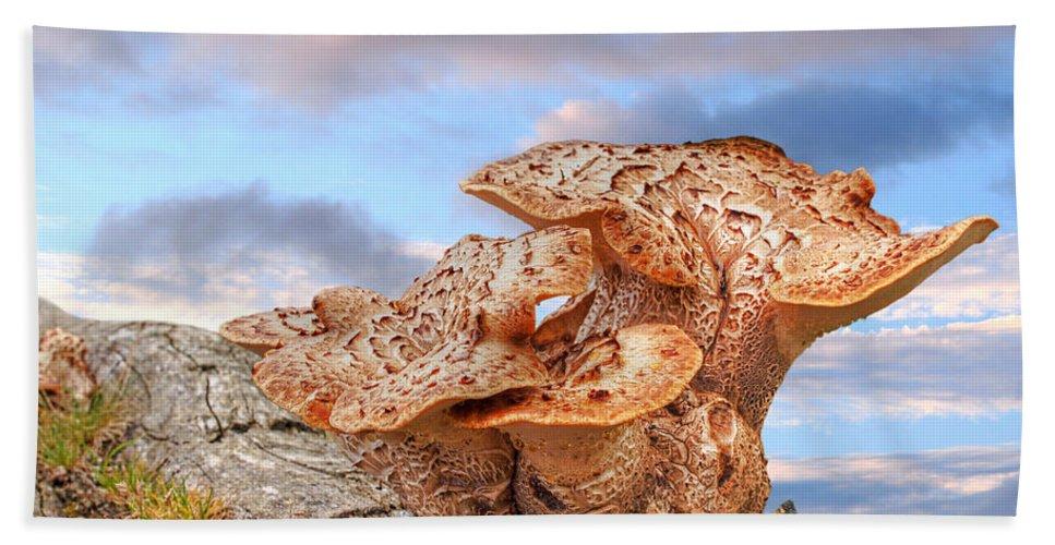 Tree Fungus Bath Sheet featuring the photograph Funky Fungi by Gill Billington