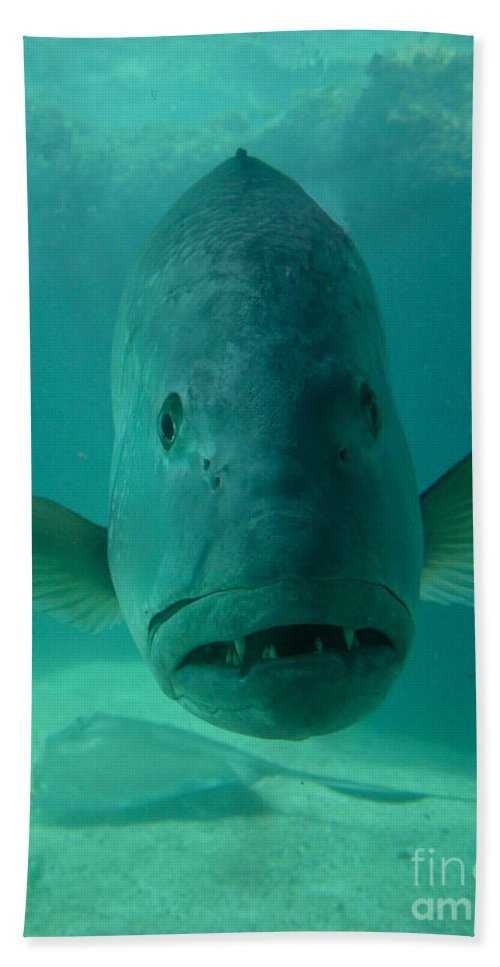 Aquarium Hand Towel featuring the photograph Funny Fish Face by Amy Cicconi