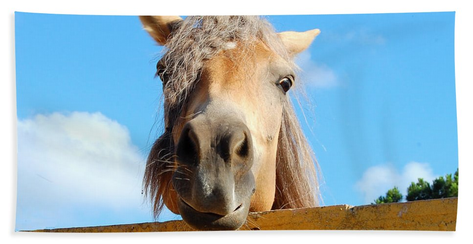 Funny Horse Hand Towel featuring the photograph Funny Horse by Gina Dsgn