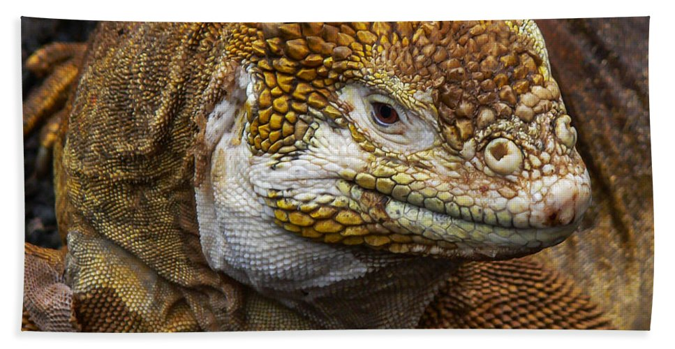 Galapagos Bath Sheet featuring the photograph Galapagos Land Iguana by Allen Sheffield