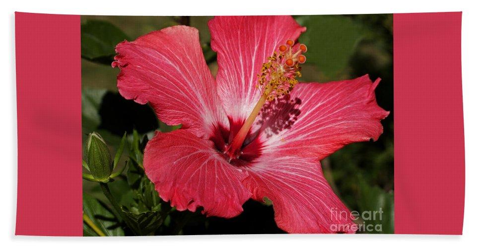 Hibiscus Bath Sheet featuring the photograph Garden Beauty by Ann Horn