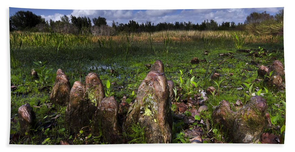 Clouds Bath Sheet featuring the photograph Garden In The Glades by Debra and Dave Vanderlaan