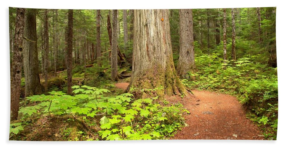 Cheakamus Rainforest Bath Sheet featuring the photograph Garibaldi Wilderness Rainforest by Adam Jewell