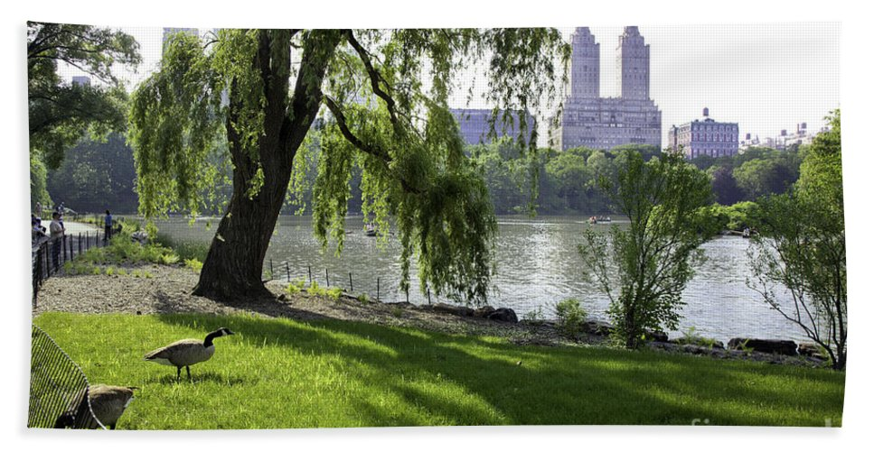 Geese Bath Towel featuring the photograph Geese In Central Park Nyc by Madeline Ellis
