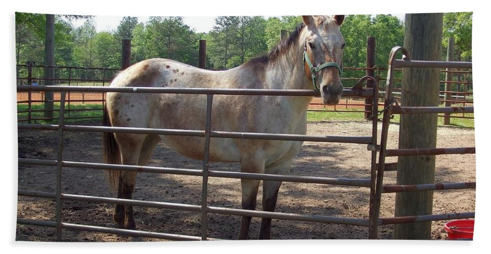 Horse Bath Sheet featuring the photograph Gem by Lisa Wormell