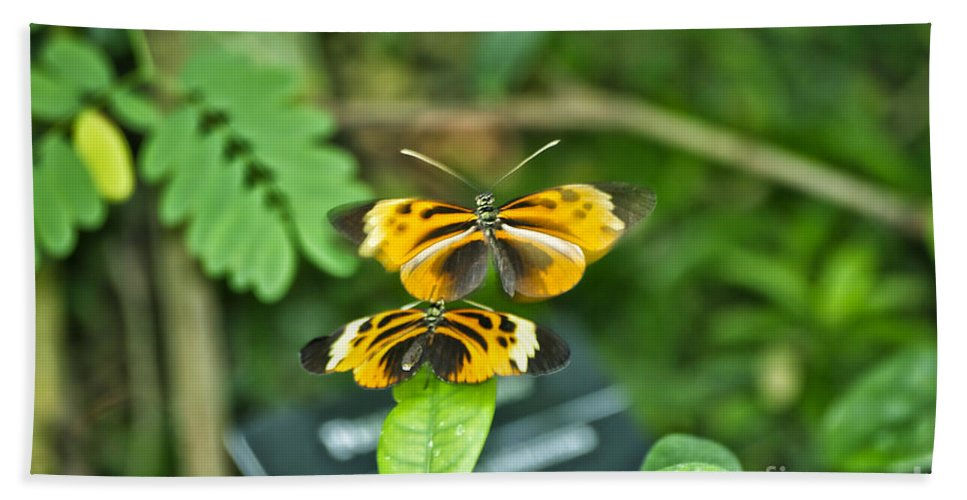 Mating Bath Sheet featuring the photograph Gentle Butterfly Courtship 02 by Thomas Woolworth