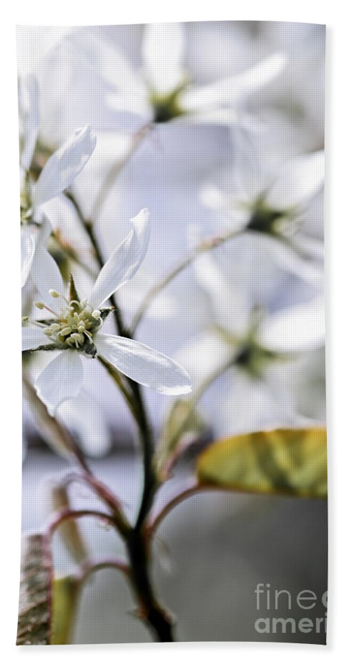 White Bath Sheet featuring the photograph Gentle White Spring Flowers by Elena Elisseeva