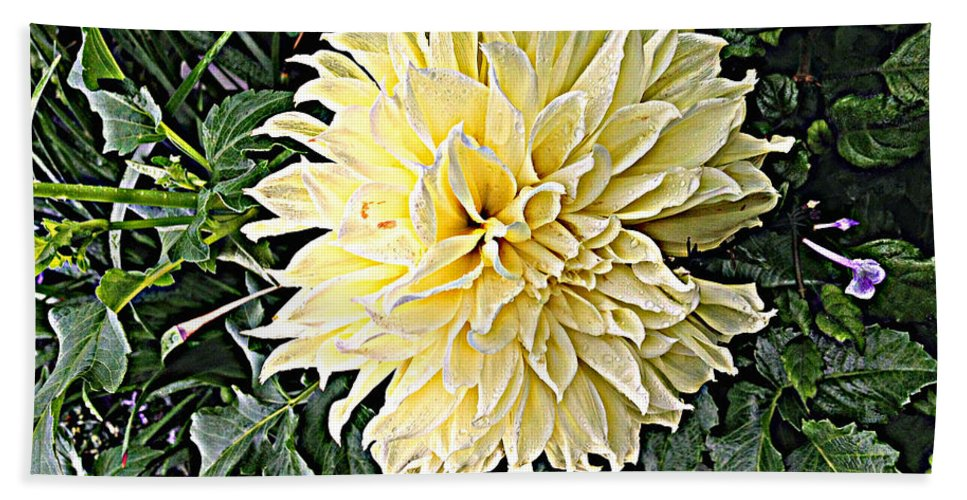 Quincy Illinois Bath Sheet featuring the photograph Gentleness In The Garden by Luther Fine Art