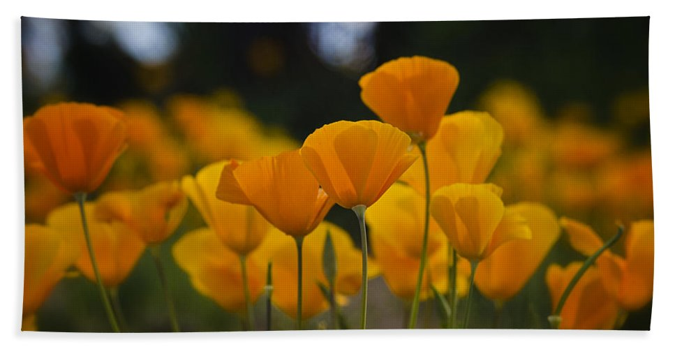 Poppies Bath Towel featuring the photograph Gently Swaying In The Wind by Saija Lehtonen
