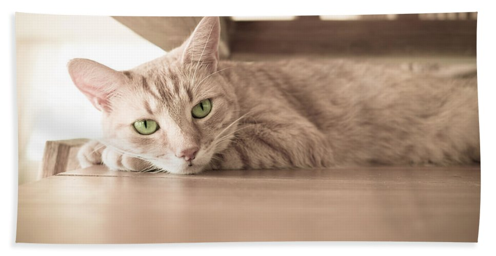 Cat Bath Sheet featuring the photograph George The Cat by Ferry Zievinger