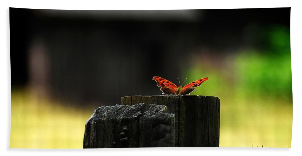Butterfly Hand Towel featuring the photograph Get Ready ... Get Set by Lois Bryan