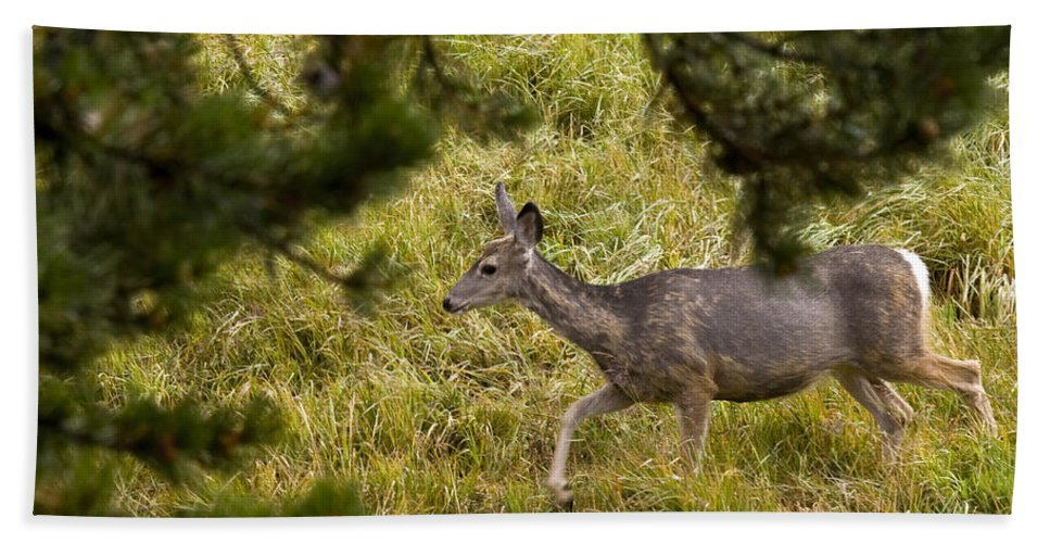 Deer Hand Towel featuring the photograph Getting Out Of Sight by Crystal Heitzman Renskers