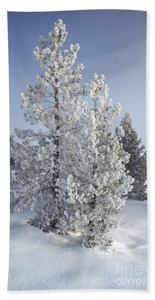 Yellowstone Hand Towel featuring the photograph Ghost Trees Of Yellowstone by Sandra Bronstein