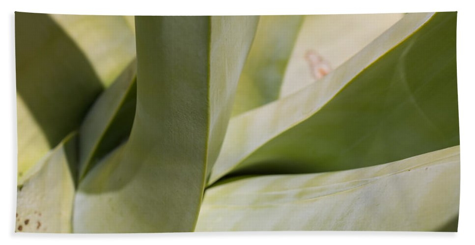 Agave Hand Towel featuring the photograph Giant Agave Abstract 8 by Scott Campbell
