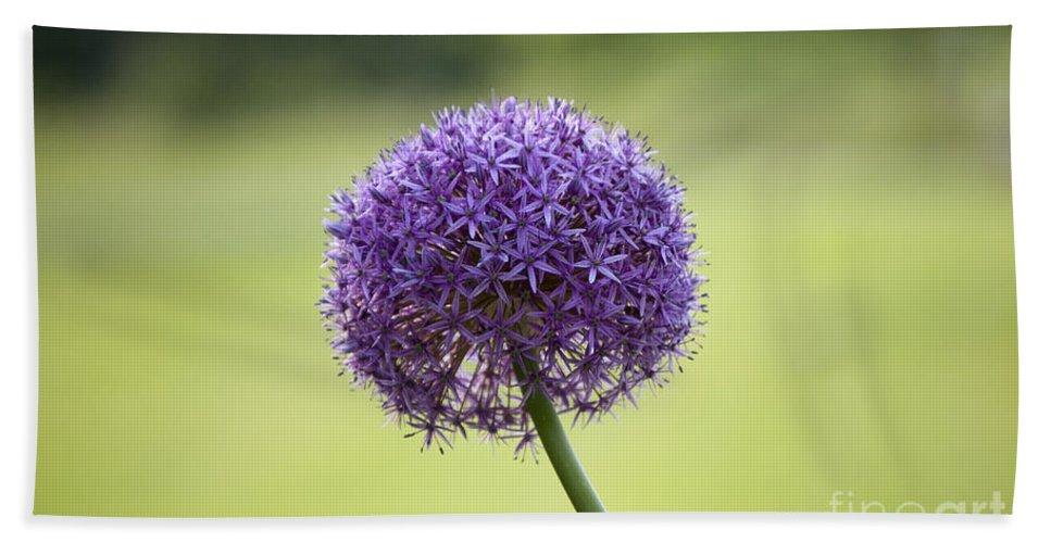 Giant Allium Bath Sheet featuring the photograph Giant Allium Flower by Michael Ver Sprill
