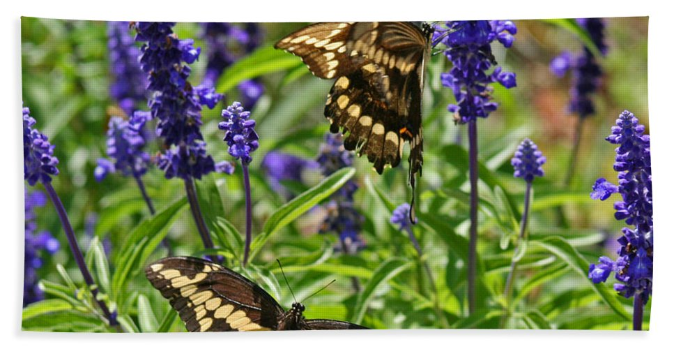 Giant Hand Towel featuring the photograph Giant Swallowtail Butterfly Couple by Karen Adams